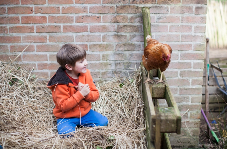 chickens-8